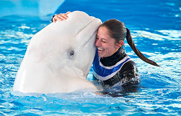 Animal Trainer and Beluga