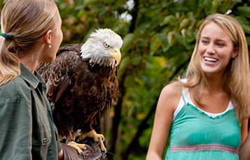 A zookeeper with an eagle