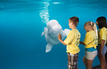 SeaWorld Campers with a Beluga