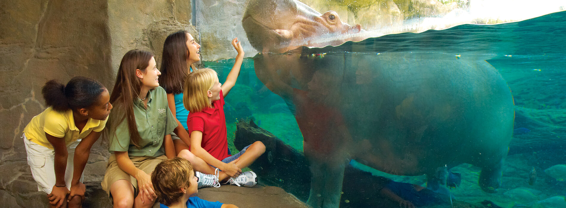 Teachers and Educators Camps at Busch Gardens Tampa Bay