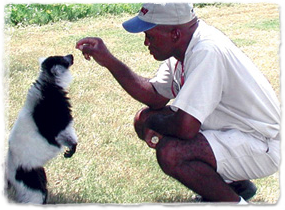 A lemur stands on hind legs and extends its head toward a veterinarian's hand.