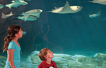 boy and girl looking at aquarium with sting rays
