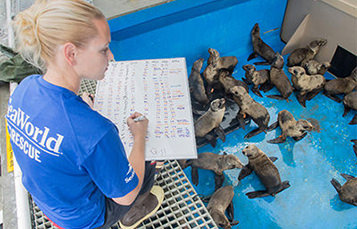 Sea World animal care specialist marking observations on seal pups