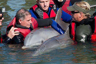 Sea World rescue team with two bottlenose dolphins