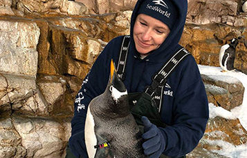 Sea World animal care specialist with penguin
