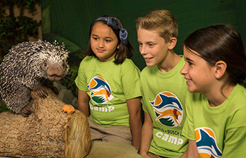 3-4 Day Camps at Busch Gardens Tampa Bay