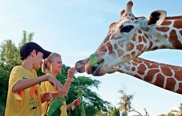 Classroom Activities I Seaworld Parks Entertainment